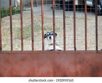 Dog looking at camera behind a red fence