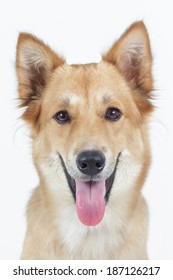 Dog looking directly at camera with happy face.