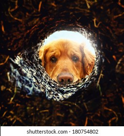 a dog looking down a hole in the ground with the sun shining behind