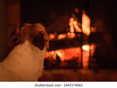 Dog looking at fire in fireplace