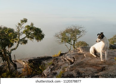 Dog looking at the fog in Brazil