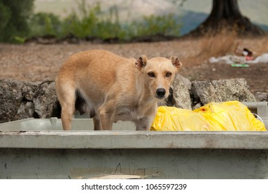 Dog looking for food in dumpster