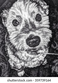 A dog looking up into the camera with ears pinned back in black and white sketching.