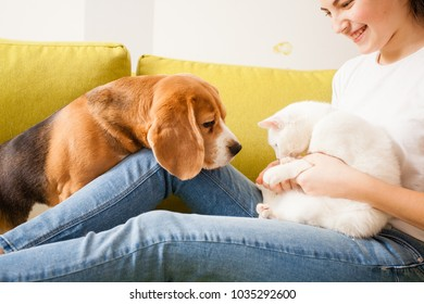 the dog is looking on the cat
