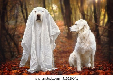 Dog looking at other dog who is disguised as a ghost