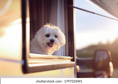 Dog looking out of motorhome or caravan window on vacation