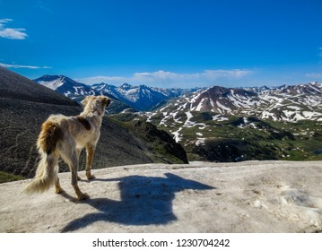 Dog looking out over snow capped mountains in Colorado