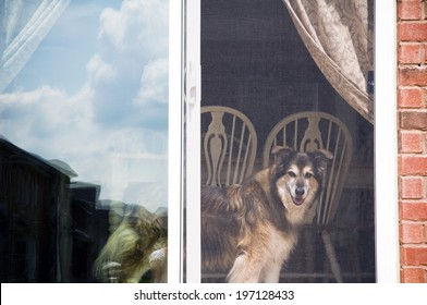 A dog looking out of a screen door with a table and chairs behind it.