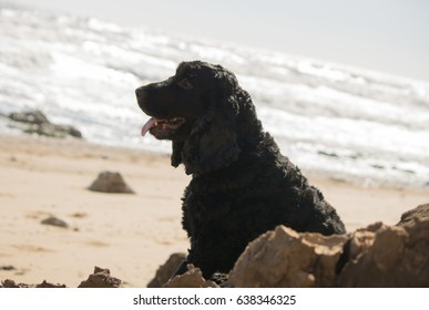 dog looking out to sea