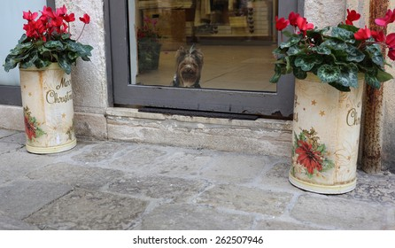 A dog looking out from a shop