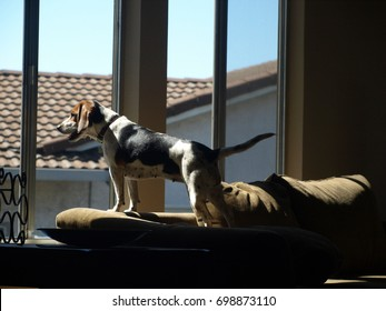 Dog Looking Out a Window, Waiting for his Human to Come Home
