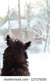 dog looking out the window in winter
