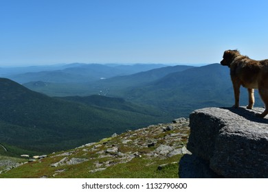 dog looking over the White mountains