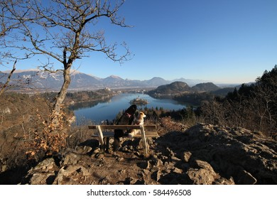 Dog looking at Panorama of Bled lake, Slovenia