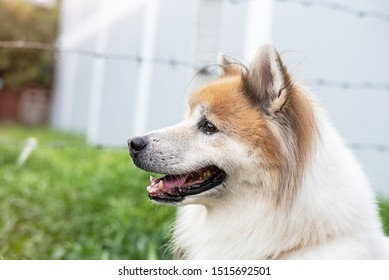 The dog looking something straight,black eye and nose,big ear,cute animal,blurry light around