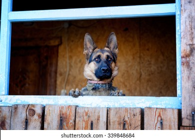 Dog looking through a window