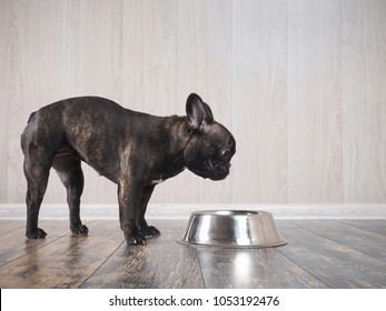 The dog looks at the bowl for food