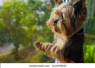 The dog looks out the window