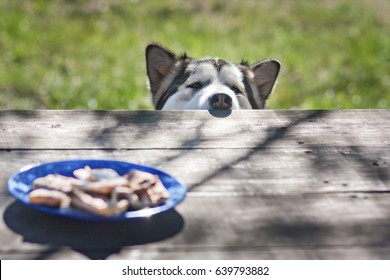 The dog looks at the table. A treat on the table. A hungry big dog.