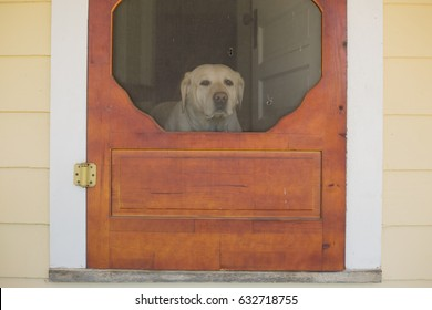 A dog looks through a screen door  waiting for something. Horizontal image.
