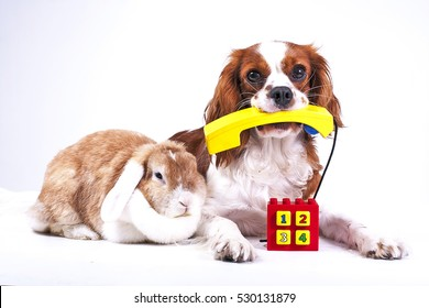 Dog with lop bunny rabbit phone illustrate customer service on website Pet services telephone number dog contact form. Animal hospital doctor service, customer service phone contact form illustration.