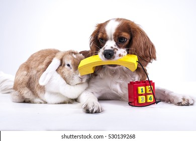 Dog with lop rabbit bunny phone illustrate customer service on website. Pet services telephone number dog contact form customer service phone contact form illustration Animal doctor hospital service