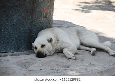 Bear Lying Down Images Stock Photos Amp Vectors Shutterstock