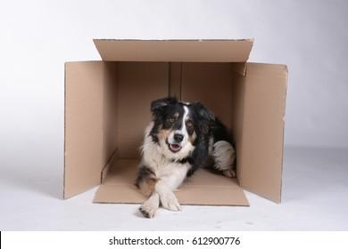 Dog Box Images, Stock Photos & Vectors | Shutterstock
