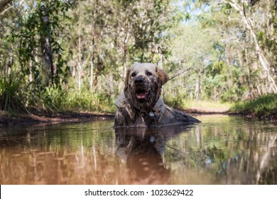 Dog lying in a mud puddle