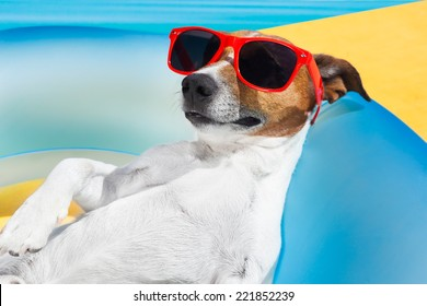 Dog lying on air mattress by the swimming pool sun tanning with sunglasses relaxing and resting