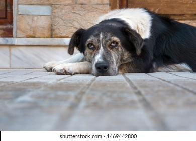 Dog lying on backyard front yard. Dog with red eyes. Pet put muzzle on paws. Sad mixed breed dog. Non breed dog basking, warming with grey floor on background. copy space