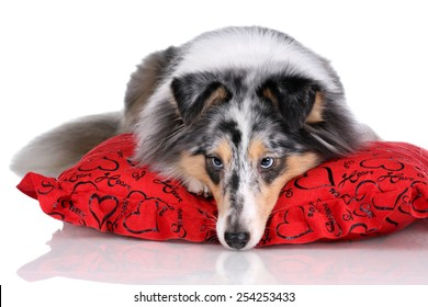 Dog lying on a bed