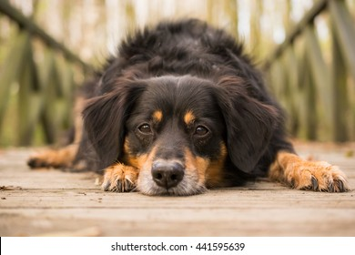 Dog lying on a bridge and looks into the camera