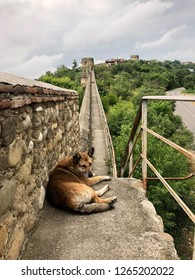 Dog lying on the defnesive wall of Signagi, Kakheti, Georgia