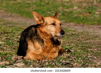 A dog lying on the grass