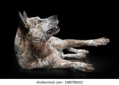 Dog lying on his side