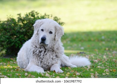 Dog lying on meadow and looking