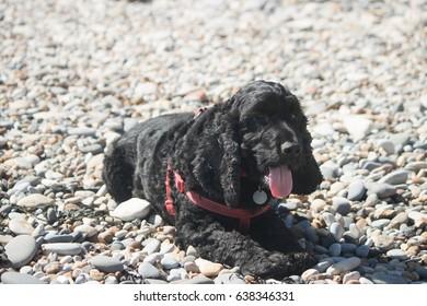 dog lying on pebbles