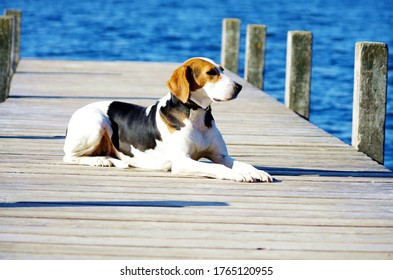 Dog lying on a wooden bridge lakeside