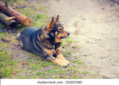 Dog lying outdoors on the dirt road