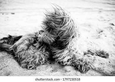 dog lying in the sand