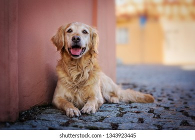 Dog lying in a small town