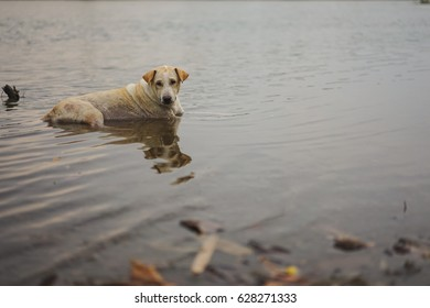 Dog lying in the water