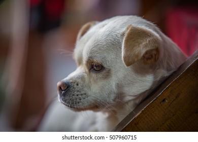 The dog made a sad face