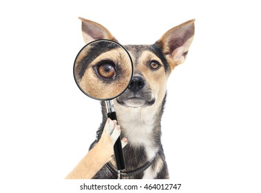 4fceda4e9d19a Dog Magnifying Glass Images