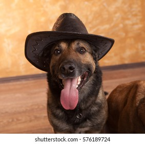 Dog malinois in the hat
