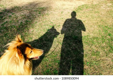 Dog and man shadows silhouettes on a ground