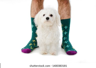 Dog and man in socks. Isolated on white background
