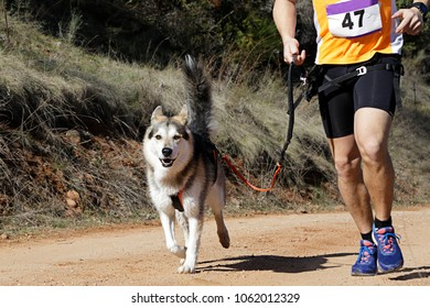 Dog and man taking part in a popular canicross race