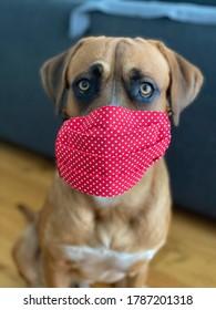 Dog with mask against Civid19 virus